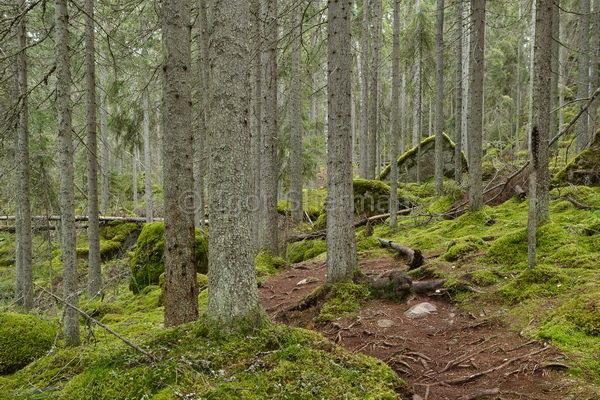 Серый лес