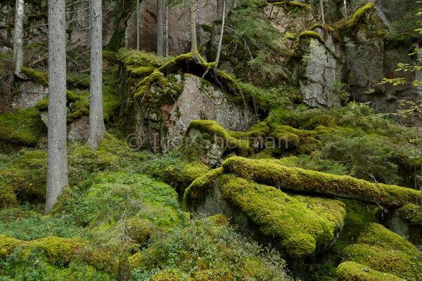 Деревья на камнях