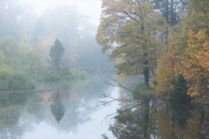 Осень в Приютино