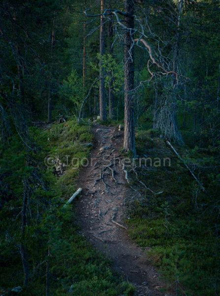 Лес Бабы-Яги