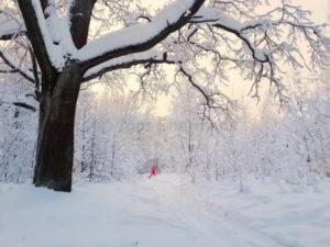 Лыжный выходной